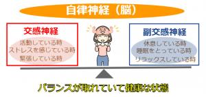 自律神経 (2)