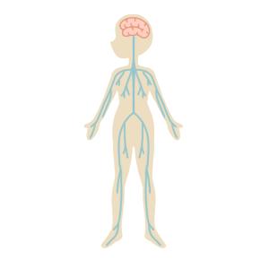 脳脊髄液の流れ