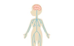 頭の歪み+内臓疲労+骨盤・股関節を整えます